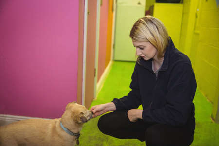 Woman feeding puppy at dog care centre