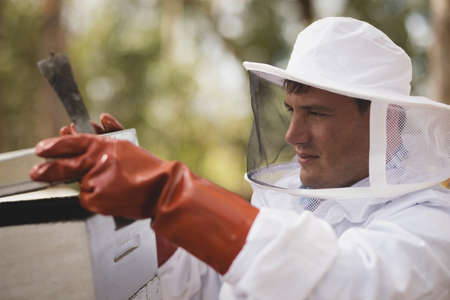 protective suit: Close-up of male beekeeper opening honeycomb at apiary LANG_EVOIMAGES