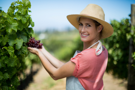 cupped: Portrait of happy female farmer holding red grapes at vineyard