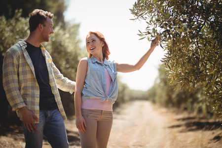 Cheerful young woman holding olive tree while standing with boyfriend at farm Stock Photo