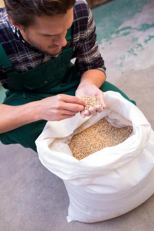 High angle view of worker examining barley at factory Stock Photo