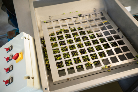 harvested: Olives being processed in machine at factory Stock Photo