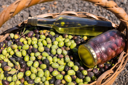 harvested: Close-up of olives, jar and olive oil bottle in basket on a sunny day