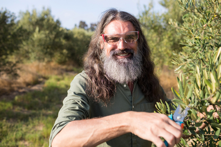 Portrait of happy man pruning olive tree in farm on a sunny day