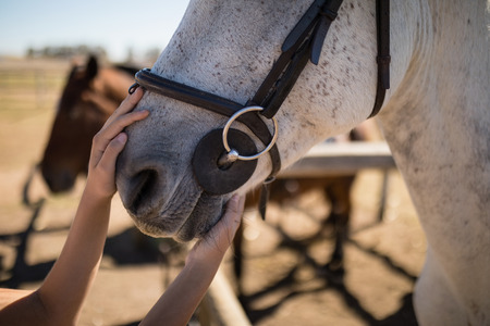 Close-up of hand caressing white horses mouth Imagens