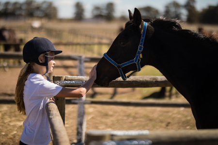 Girl stroking a brown horse in the ranch on a sunny day