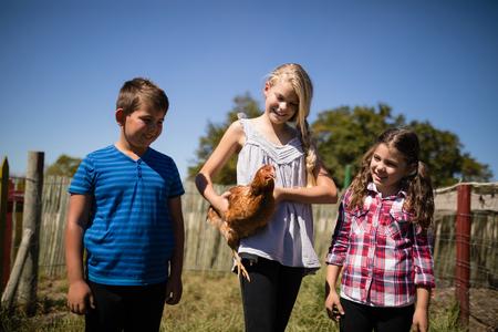 晴れた日に農場で鶏を運ぶ子供 写真素材