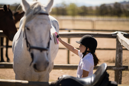 Girl grooming the horse in the ranch on a sunny day Stock Photo - 81722697