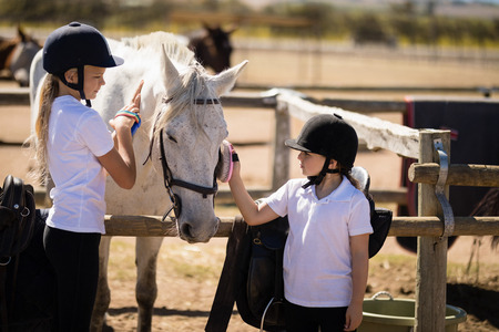 Girls grooming the horse in the ranch on a sunny day
