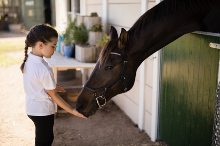 Little girl feeding a horse in the stable Stock Photo
