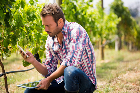 Young man using phone while holding digital tablet at vineyard