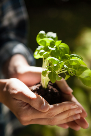 back ache: Cropped image of woman holding seedling in hands during sunny day