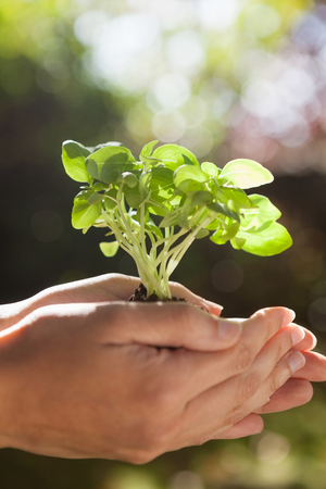 cupped: Close-up of cropped woman hands holding seedlings during sunny day