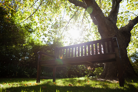 back ache: Empty bench against trees on field in backyard during sunny day