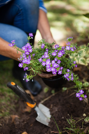 Low section of senior woman planting purple flowers in soil at backyard