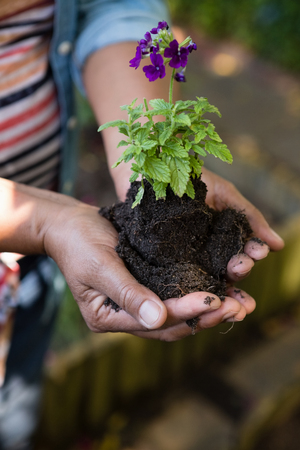 Close-up of woman holding sapling plant in garden Stock Photo