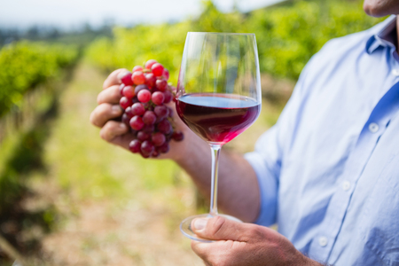 Mid section of vintner holding grapes and glass of wine in vineyard Stock Photo