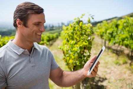 vintner using digital tablet in vineyard on a sunny day
