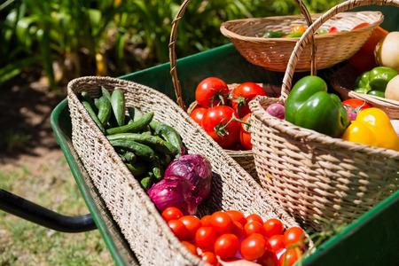 Various fresh vegetables in wheelbarrow at farm