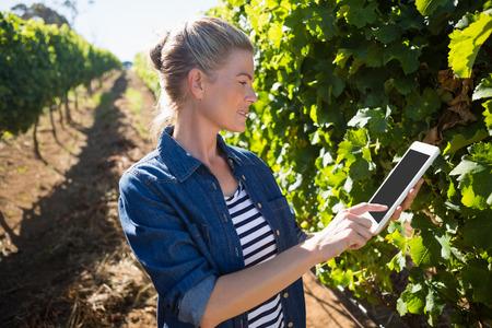 Female vintner using digital tablet in vineyard on a sunny day