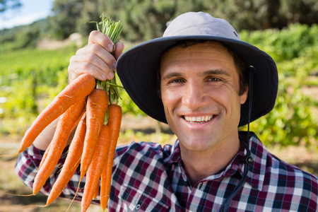 Portrait of farmer holding harvested carrots in field Stock Photo