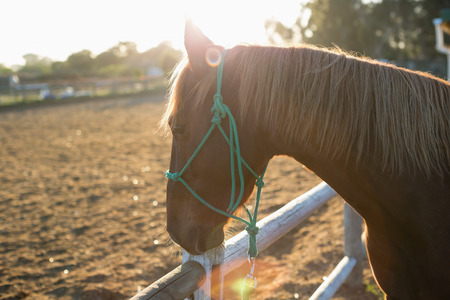 Horse standing in the ranch on a sunny day