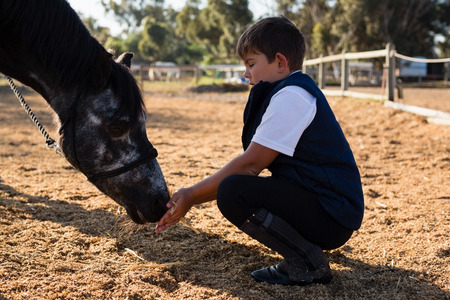 Boy feeding the horse in the ranch on a sunny day