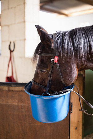 Close up of horse eating food in bucket at stable