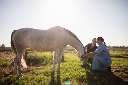Woman and vet tending to horse in field on sunny day