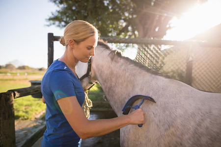 Female jockey cleaning horse with sweat scraper at barn Reklamní fotografie
