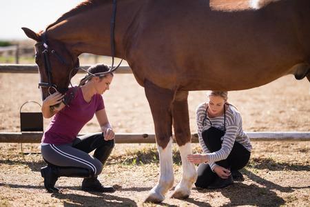 フィールドの上にしゃがみながら馬足を見て女性と女性の獣医