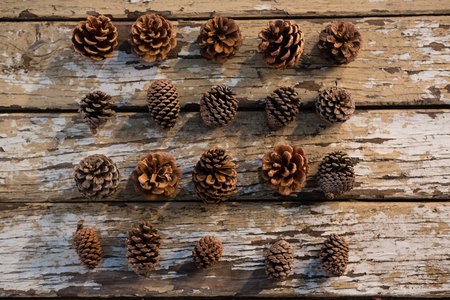 Directly abvoe shot of various pine cones arranged on wooden tables Stock Photo