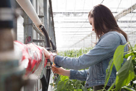 Young woman working in greenhouse LANG_EVOIMAGES