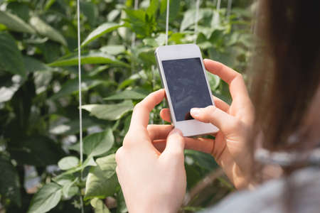 Womans hand using mobile phone in greenhouse