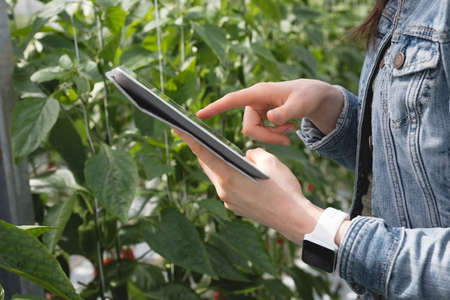 Mid-section of woman using digital tablet in greenhouse LANG_EVOIMAGES