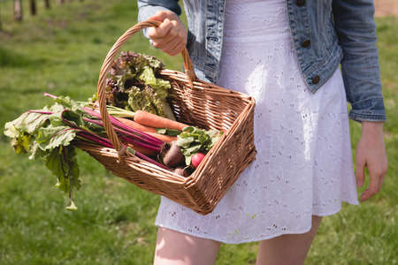 Mid-section of woman holding basket of root vegetables on a sunny day