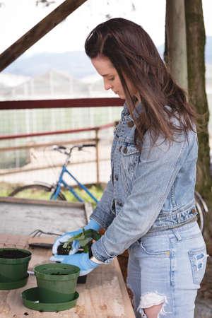 Woman sapling a pot plant in greenhouse