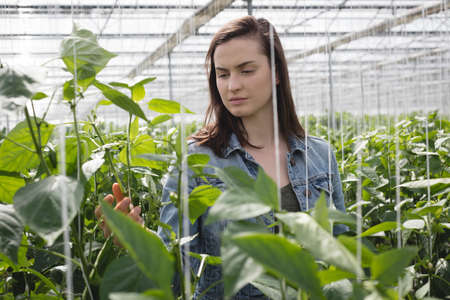 Woman examining a plant in green house LANG_EVOIMAGES