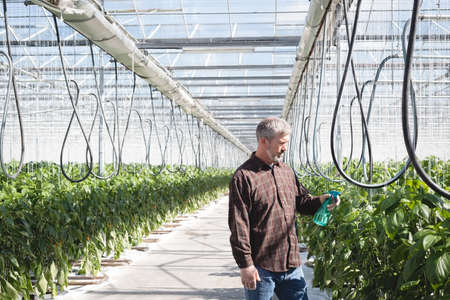 Man spraying water on plant in greenhouse