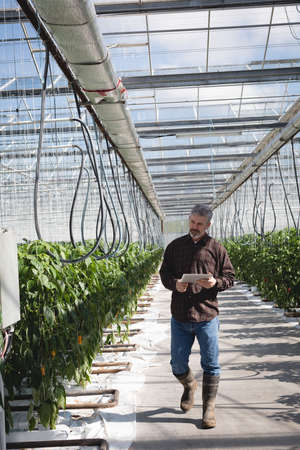 Man walking with digital tablet in greenhouse