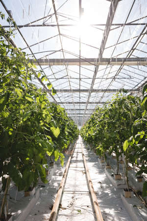 Interior view of modern greenhouse