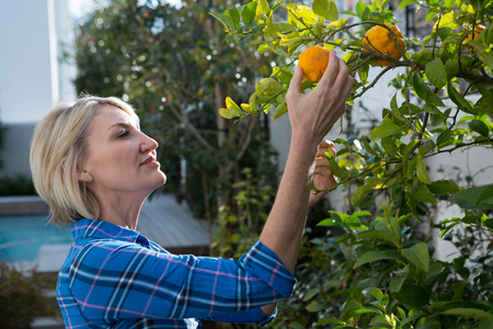 Beautiful woman examining orange on tree in garden