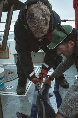 Fishermen tagging fin of shark in boat