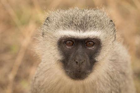 Close-up of monkey in safari park