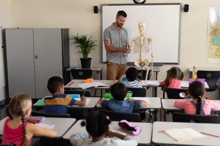 Far sight of male teacher explaining human skeleton model in classroom of elementary school
