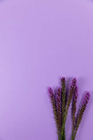 Close up view of a composition with six fresh springs of lilac heather flower arranged on a purple plain surface.