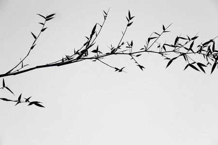 japanese art: Shadow of tree. Black and white color. Image like a Japanese painting.