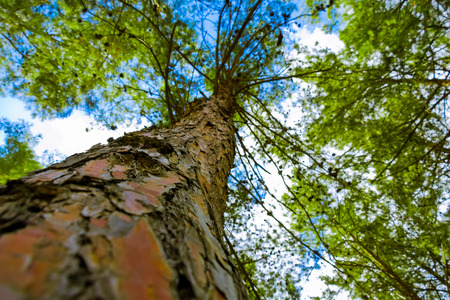 narrow depth of field: Tree from below. Tree with a narrow depth of field. Vivid color.