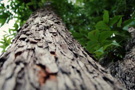 narrow depth of field: Close up of a tree with a narrow depth of field at cold weather Stock Photo