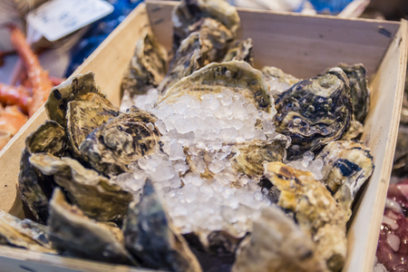 Fresh shell oysters at a fish market stall